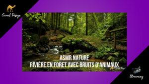 ASMR Nature - rivière en foret avec bruits d'animaux camel design